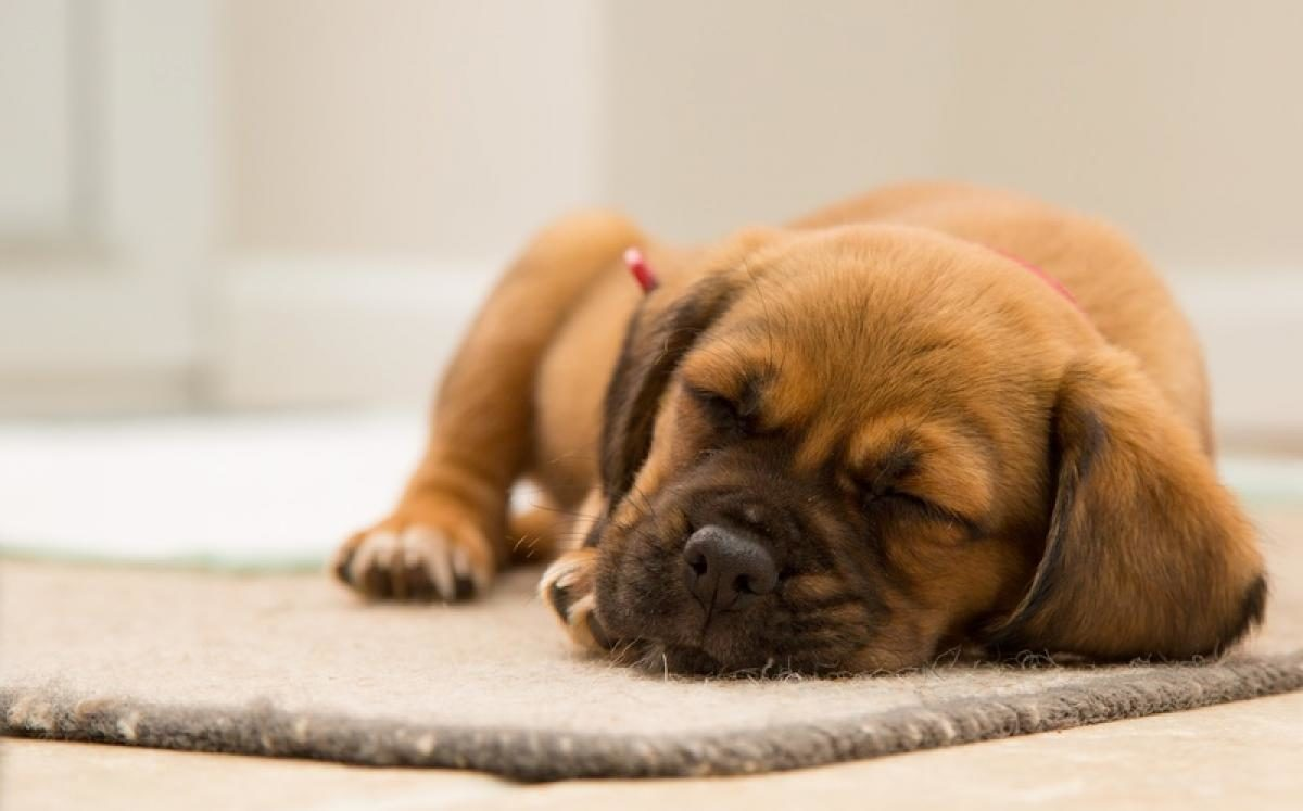 puppy kennels for sleeping