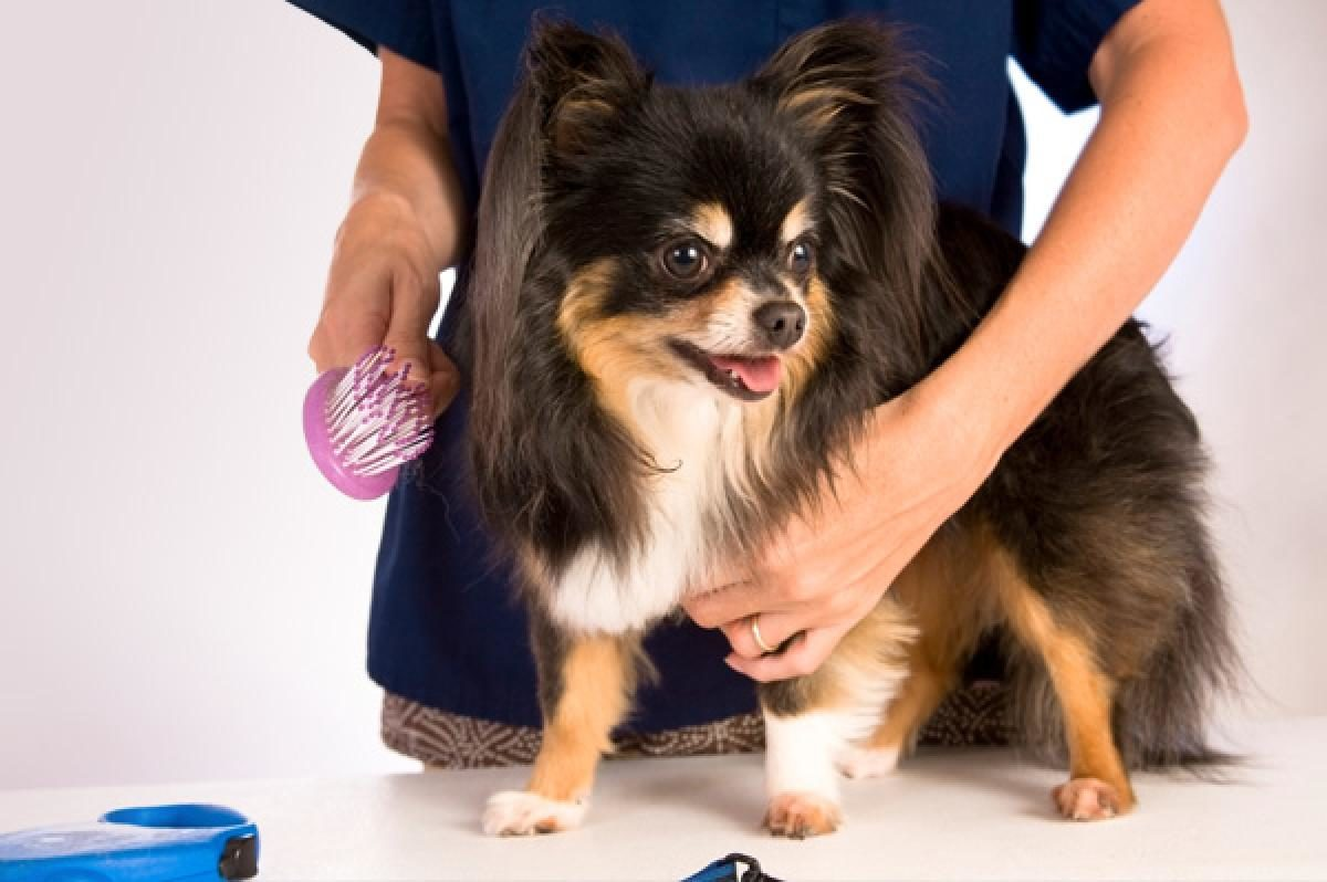 professional dog kennels dog grooming