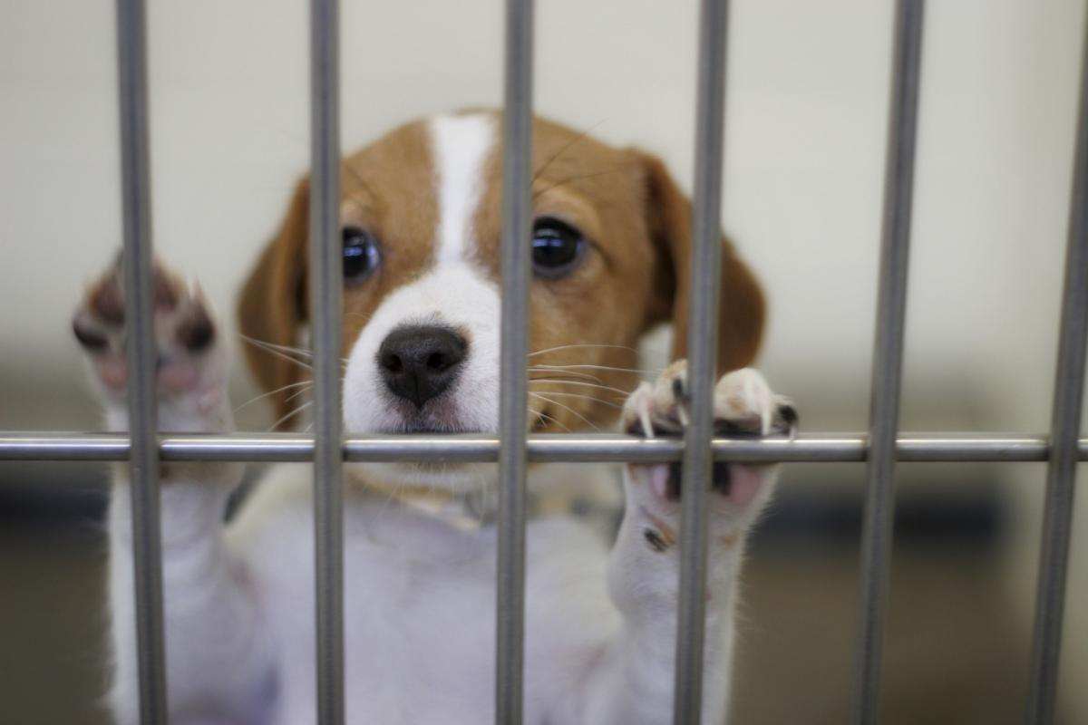 professional dog kennels dog shelter