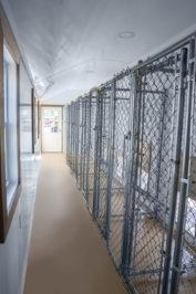 12x32 dog kennel interior