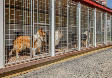 20x60 dog kennel boxes