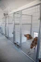 20x60 dog kennel interior