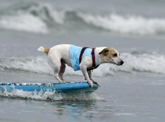 keep your dog cool in the summer heat