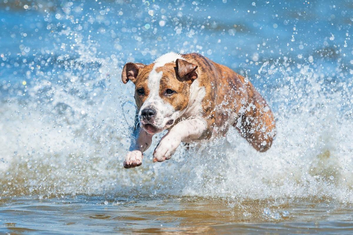 keep your dog cool
