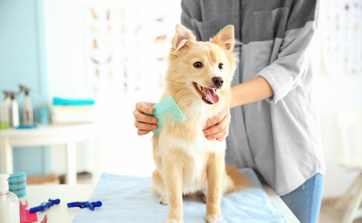 dog grooming to keep your dog cool