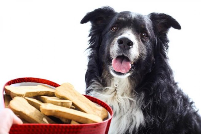 how to make your own dog treats sunbeam