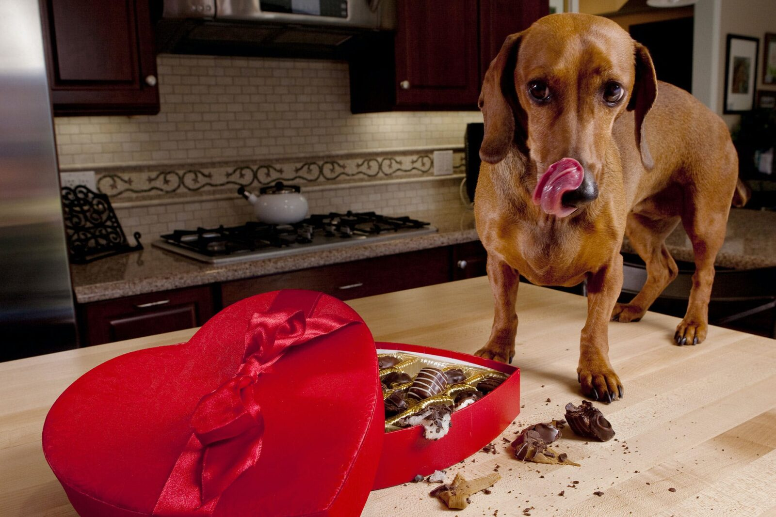 keep your dog safe from chocolate
