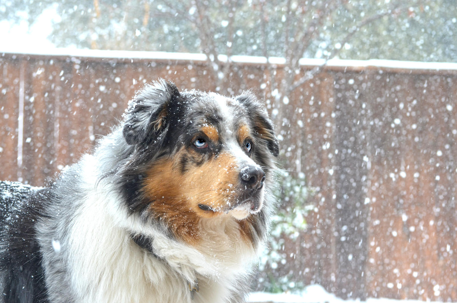 dog in snow 10 tips keeping your dog warm in winter