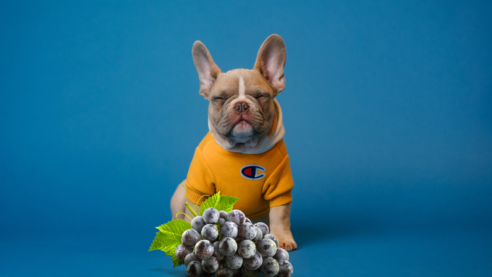 dogs should not eat grapes