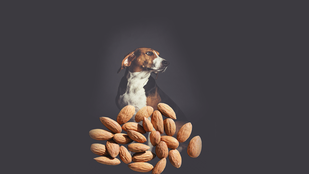 foods dogs should not eat almonds