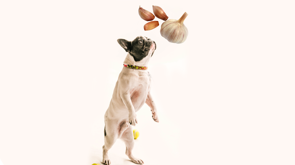 foods dogs should not eat garlic