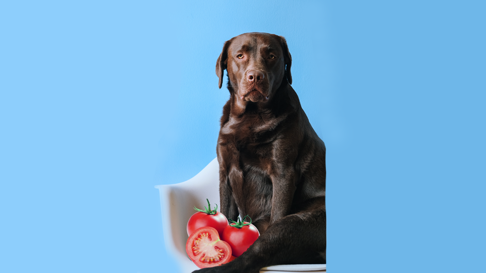 foods dogs should not eat tomatoes