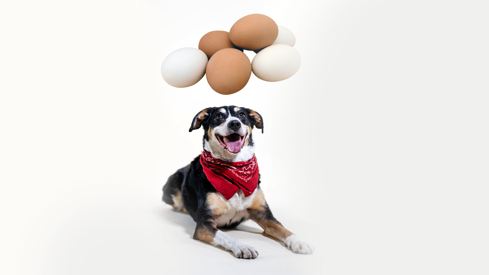 foods dogs should not eat eggs