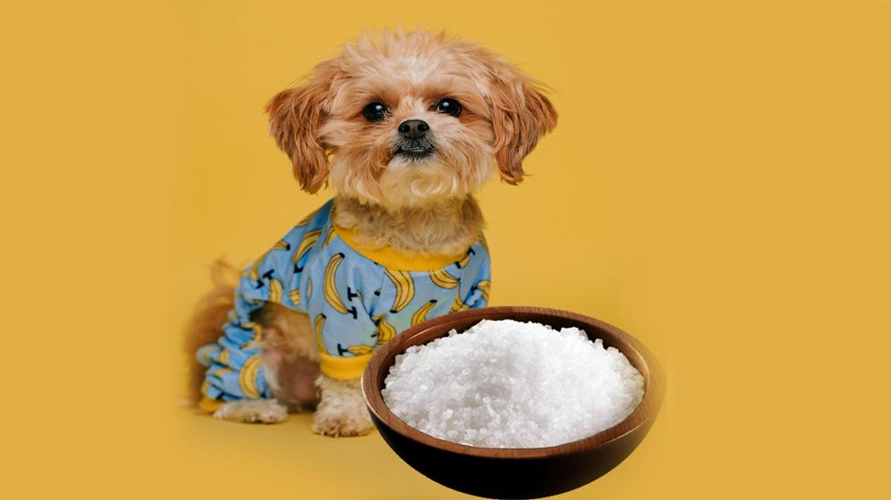 foods dogs should not eat salt