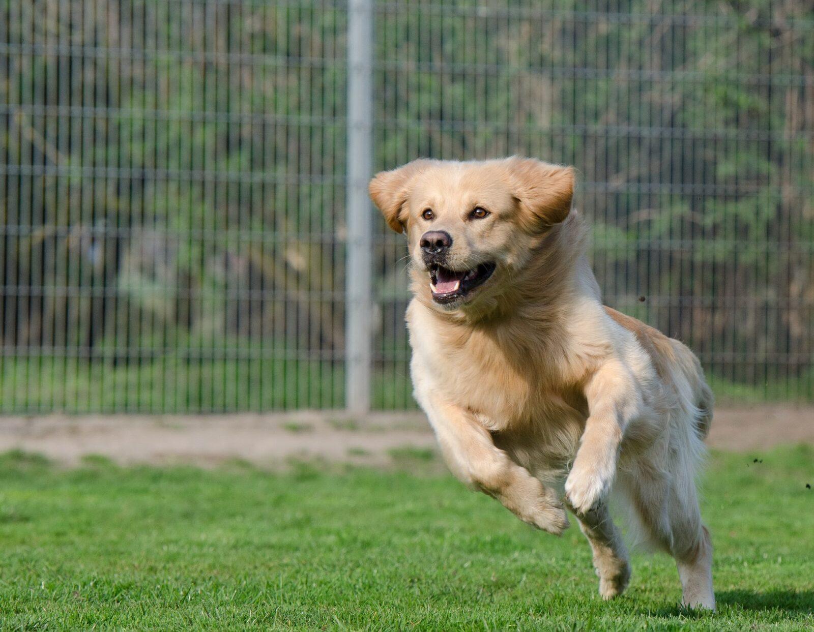 dog kennels for boarding