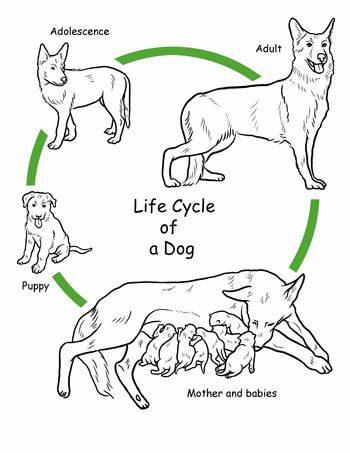 dog breeding copy
